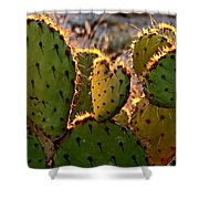 Cactus Heart In Sunset Shower Curtain
