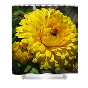 Calendula Named Bon-bon Yellow Shower Curtain