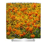 California Poppies And Goldfields Dance Shower Curtain