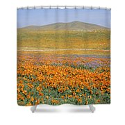 California Poppies Fill A Landscape Shower Curtain