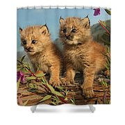 Canadian Lynx Kittens, Alaska Shower Curtain