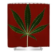 Cannabis Sativa, Marijuana Leaf Shower Curtain
