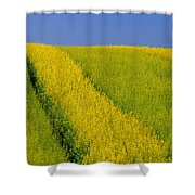 Canola Field, Darlington, Prince Edward Shower Curtain