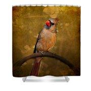 Cardinal II Shower Curtain