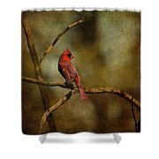 Cardinal IIi Shower Curtain