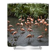 Caribbean Flamingos At The Zoo Shower Curtain