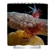 Cascades Caverns Salamander Shower Curtain