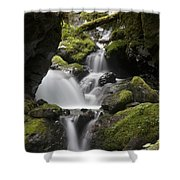Cascading Creek In Temperate Rainforest Shower Curtain