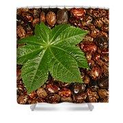 Castor Bean Leaf And Seeds Shower Curtain