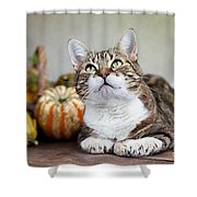 Cat And Pumpkins Shower Curtain