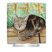 Cat Commission Sample Shower Curtain