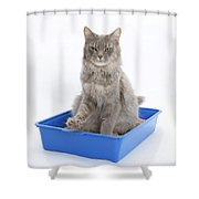 Cat Using Litter Tray Shower Curtain