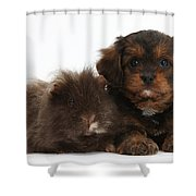 Cavapoo Pup And Shaggy Guinea Pig Shower Curtain