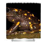 Chilean Mountains False Toad Shower Curtain