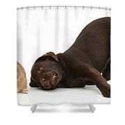 Chocolate Lab & Netherland-cross Rabbit Shower Curtain