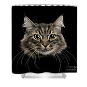 Close Up Of Cats Face Shower Curtain