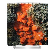 Close-up Of Live Sponge Shower Curtain by Ted Kinsman