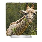 Close View Of A Giraffe Shower Curtain