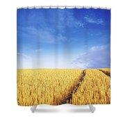 Co Carlow, Ireland Barley Shower Curtain