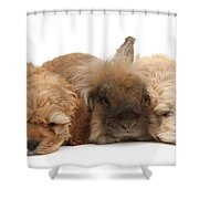 Cockerpoo Puppies And Rabbit Shower Curtain