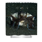 Coconut Octopus In Shell, North Shower Curtain