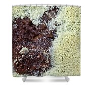 Coffee Grounds 1 Shower Curtain