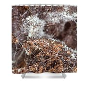 Coffee Grounds 2 Shower Curtain