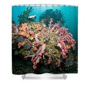Colorful Reef Scene, Komodo, Indonesia Shower Curtain
