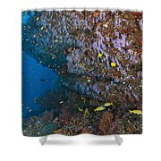 Colourful Reef Scene, Ari And Male Shower Curtain