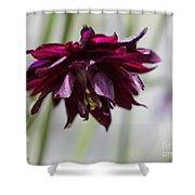 Columbine Named Miss Mi Huish Shower Curtain