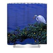 Common Egret Shower Curtain