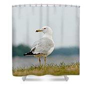 Common Gull Shower Curtain