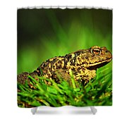 Common Toad Shower Curtain