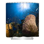 Coral And Sponge Reef, Belize Shower Curtain