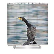 Cormorant Bird Shower Curtain