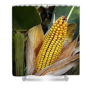 Corn Cob Shower Curtain