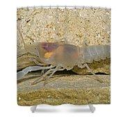Crayfish Shower Curtain