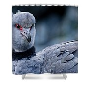 Crested Screamer Shower Curtain