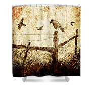 Crows And The Corner Fence Shower Curtain