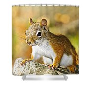 Cute Red Squirrel Closeup Shower Curtain