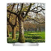 Daffodils In St. James's Park Shower Curtain by Elena Elisseeva