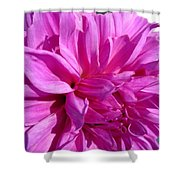 Dahlia Named Lilac Time Shower Curtain