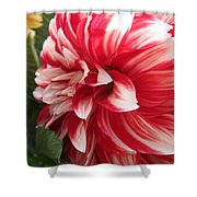 Dahlia Named Myrtle's Brandy Shower Curtain