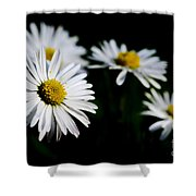 Daisy Flowers Shower Curtain