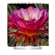 Dark Pink Cactus Flower Shower Curtain