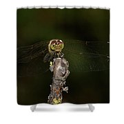 Darter 8 Shower Curtain