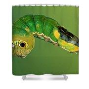 Dead-leaf Moth Oxytenis Modestia Shower Curtain