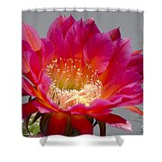Deep Pink Cactus Flower Shower Curtain