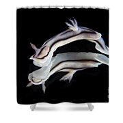 Detailed View Of A Beautiful Nudibranch Shower Curtain