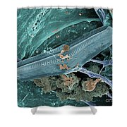 Diatom With Thermophilic Bacteria Shower Curtain by Ted Kinsman